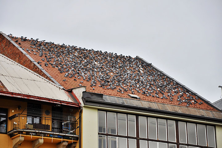 A2B Pest Control are able to install spikes to deter birds from roofs in Totteridge.