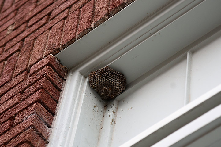 We provide a wasp nest removal service for domestic and commercial properties in Totteridge.